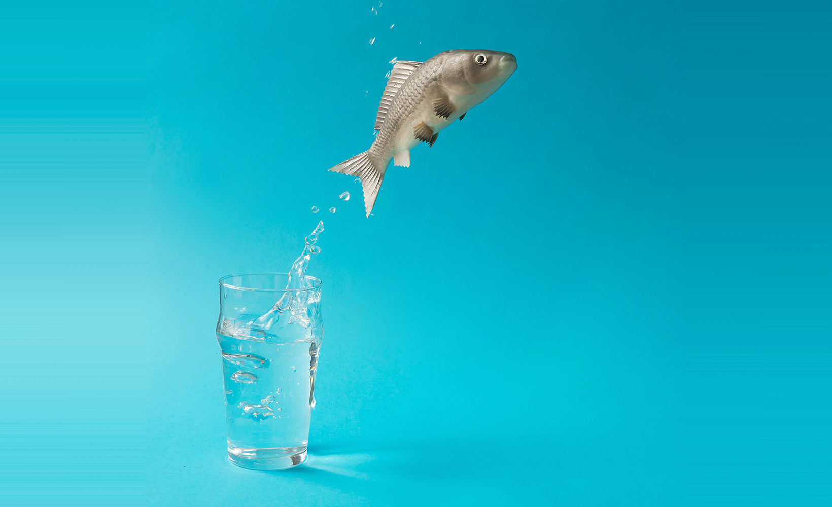 Photo of fish jumping out of pint of water.